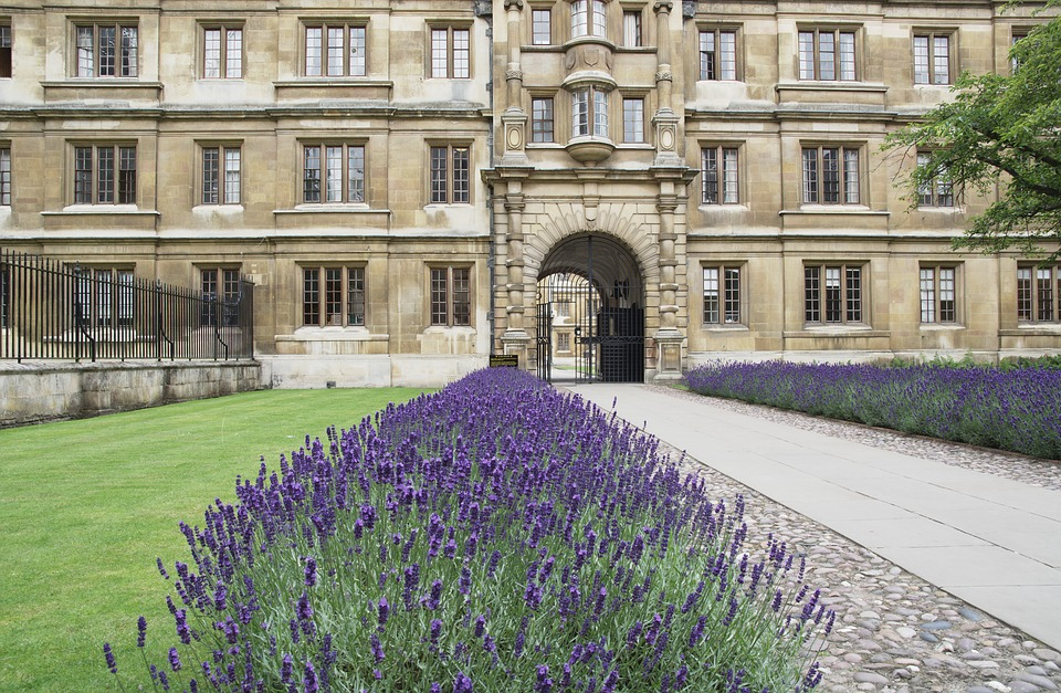 Clare College, Cambridge, Lawenda, Stare Budynku